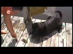 ★ Funny Dogs Videos - America's Funniest Home Videos part 287