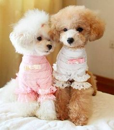 Fifi and Gigi being inspired by a new hairdo!!! does your fur baby like going to the groomer???