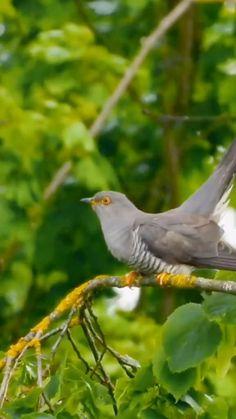 Most Beautiful Birds, Beautiful Nature Pictures, Beautiful Nature Scenes, Animals Beautiful, Funny Birds, Cute Birds, Pretty Birds, Cute Funny Animals, Bird Gif