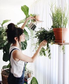 Let us help you green up your home or business, why? because it looks - LittleLeafCo