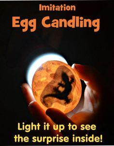 Egg Candling Activity - Make them yourself! Animal silhouette printable
