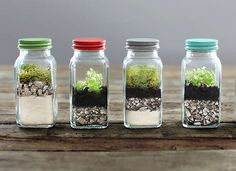 DIY Terrarium - How to Build a Terrarium
