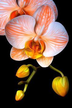 ~~ Orange Mystique ~~orchid by Bob Jensen via Eleftheria Pantelaki - Gardening For You