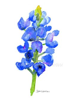 Texas Bluebonnet watercolor painting giclee print reproduction.  The paper measures 5x7 and is in portrait/vertical orientation.  Printed on fine art paper using archival pigment inks. This high quality cotton paper makes it hard to tell the original painting from the print! This quality printing allows over 100 years of vivid color in a typical home display. Prints are sent in cellophane sleeve with cardboard in a sturdy mailer to protect it while shipping.  Find more of my prints and c...