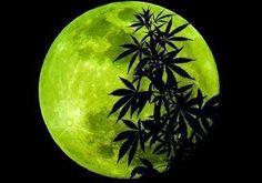 Marijuana Art   Medical Marijuana Quality Matters   Repined By 5280mosli.com   Organic Cannabis College   Top Shelf Marijuana   High Quality Shatter