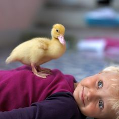 playing with his pet duck <3