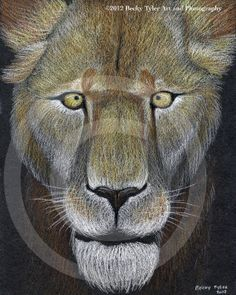 Lioness At Night Fine Art Print by BeckyTylerArt on Etsy, $20.00