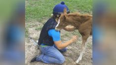 She Gets Down On The Ground, Now Keep Your Eye On The Baby Foal! (VIDEO) #horse #horses #pets #animals