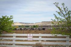 All beef paddocks