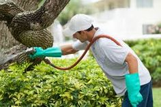 If you are looking for best pest control and termite companies then try finding them online and get the most affordable agency to help you out. Best Pest Control, Pest Control Services, Bug Control, Termite Inspection, Household Pests, Termite Control, Bees And Wasps, Pest Solutions
