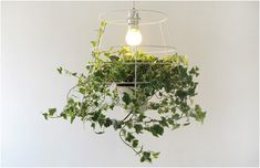 """A lamp made of a metal grid with a vine at its base, bringing light and nature into your home. Choose the type of vine and let it create a natural lampshade as it grows. It is necessary to use an energy saving light bulb, which will not only help your plant grow, but will also provide eco-friendly light.""  Design by Meirav Barzilay."