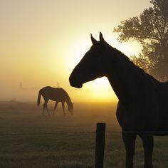 Morning horse by Rogier van der Weiden on Flickr. 454 notes guria-de-tp reblogged this from coracaodosertao para...