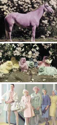 Img: Tim Walker, doe deere