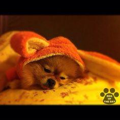 """DOG OF THE DAY  Jun.20,2012 @missdiad"
