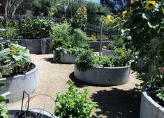 Garden Inspiration, Community Gardening, Sustainable Garden Design, Sustainable Garden, Produce Gardening, Garden Troughs, Grasses Landscaping, Garden Design, Garden Pots