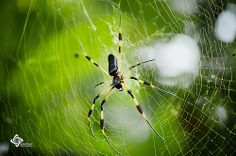 Arañas..