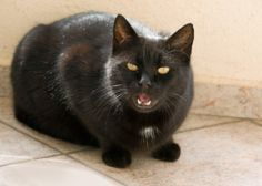 It's often easy to spot when cats are being finicky or feisty. But what about when they are showing