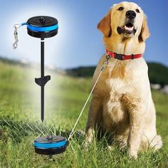 Keep your dog happy and safe with this Retractable Pet Reel. Designed for medium-sized dogs (25-80 lbs.), extending up to 20 feet with a 360° rotating head, the Pet Reel allows your dog plenty of freedom while keeping him secured within a certain area. Bring it with you to the park, on picnics, and on camping trips!