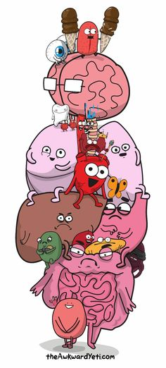 Comics about life, science comics, medical comics, and more of the funniest webcomics from The Awkward Yeti. Anatomy Humor, Anatomy Art, Human Anatomy, Heart Anatomy, Brain Anatomy, Akward Yeti, The Awkward Yeti, Heart And Brain Comic, Medical Wallpaper