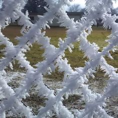 Hoar frost on a chain-link fence near Stayton Oregon