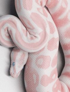 I'm not a fan of snakes but this one is beautiful. (I know they have a purpose, they just scare me) Reptiles; sub order Serpentes - Pastel Albino Snake Animals And Pets, Baby Animals, Funny Animals, Cute Animals, Green Animals, Nature Animals, Art Nature, Beautiful Creatures, Animals Beautiful