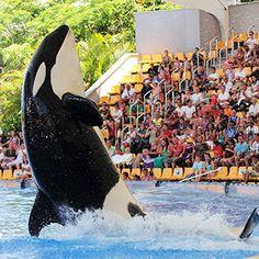 Tenerife Theme Parks Tenerife, Parks, Animals, Animales, Animaux, Teneriffe, Animal, Animais, Parkas