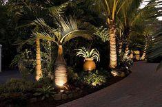 florida garden ideas, lighted Tropical Palm Trees #landscapinglights #floridagardening