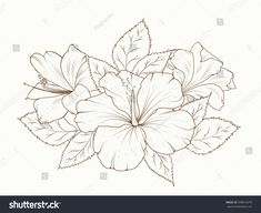 Hibiscus and lily flowers bouquet garland composition. Isolated black and white detailed vector design sketch drawing. Bunch of spring summer flowers. Hibiscus Flower Drawing, Hibiscus Flower Tattoos, Blue Lotus Flower, Hibiscus Plant, Hibiscus Flowers, Flower Sketches, Drawing Sketches, Art Drawings, Botanical Illustration