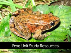 frog unit study resources - TheHomeschoolScientist.com