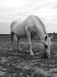 Horse Photo Reference, Horses, Animals, Animales, Animaux, Animal, Animais, Horse