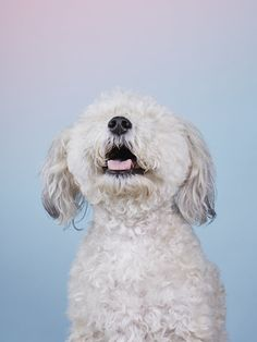 Dog Photobooth: Alma Haser travelling studio to capture a distinct portrait of each delightful dog Animals And Pets, Cute Animals, Wild Dogs, Photojournalism, Pet Portraits, Pet Dogs, Doggies, Animal Photography, Photo Booth