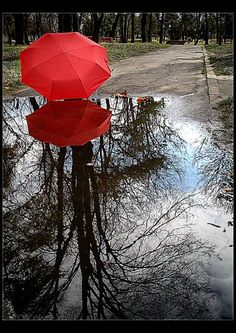 The Red Umbrella Diaries V  By: Nadia Neagu