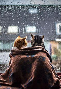 Ngắm mưa