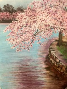 Cherry blossoms on the title basin, Spring, self pesto