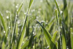 """""""Morgenfrische"""" Bild: Sabine Küng, www.landwirtschaft.ch"""