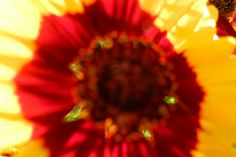 Garden flowers - Extreme closeup - 443