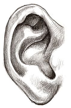 Drawing the Ear - Learn how to draw | Doodles | Pinterest | Search ...