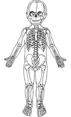 a4a879c87f28c15b99af1eddbe4aeb9f harvest moon skeletons skeletal system diagram without labels printable human skeleton