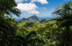 floresta-da-tijuca-facts-about-rio-de-janeiro-things-to-do-in-rio-de-janeiro