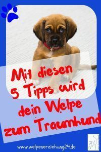 Fünf Supertipps zur Welpenerziehung With these 5 super tips, which you can easily replicate, you ens Animals And Pets, Baby Animals, House Breaking A Puppy, Amazing Animals, Dog Agility, Famous Last Words, New Puppy, Dog Care, Dog Training