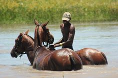 The horses cooling down from the heat.