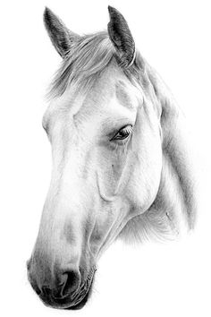 Amazing hand drawn pencil drawings of horses. Transform your favourite photo of your horse into a pencil drawing.