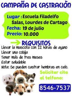 Campaña de Castracion, Lourdes de Cartagohttp://www.desktopcostarica.com/eventos/2014/campana-de-castracion-lourdes-de-cartago