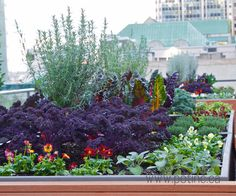Rooftop Raised Bed Garden, Vancouver