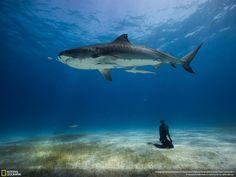 F_U_V_M's National Geographic photo favorites.