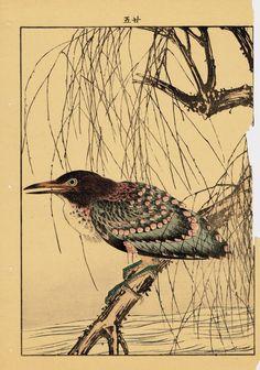 "Japanese Antique Original Woodcut Print Imao Keinen ""Withy Black-crowned night heron Night heron"""