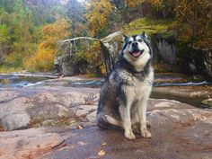 Top 5 Trails Within 30 Minutes of Rapid City Rapid City, Plan Your Trip, South Dakota, Rock Climbing, Elk, Dog Pictures, Trials, The Great Outdoors, Animal Kingdom
