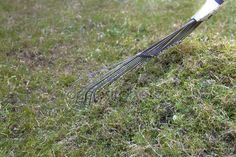 Jeśli chcesz skutecznie usunąć mech z trawy, a przy tym nie zaszkodzić rosnącym w ogródku kwiatom i drzewom, spróbuj ten wypróbowany naturalny sposób: Potrzebujesz: 2 łyżki sody oczyszczonej 4 łyżki oleju rzepakowego 2 litry wody 2