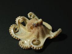 Afbeeldingsresultaat voor netsuke octopus