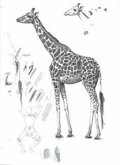 Giraffe.Pencil Drawing